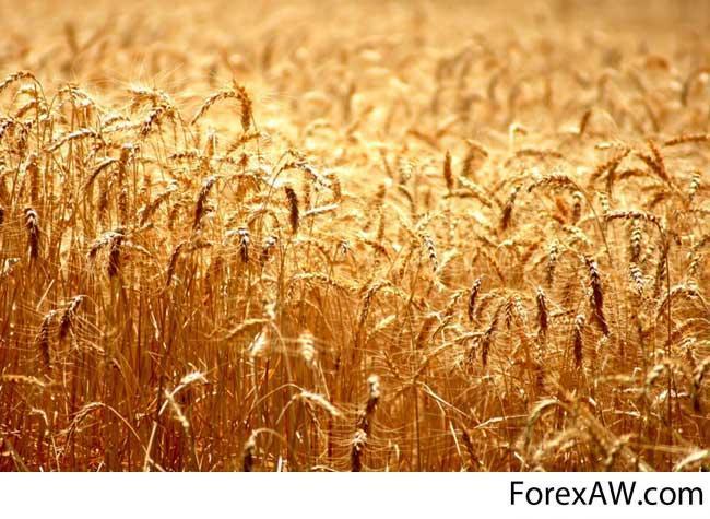 Курсовая работа по теме посев озимой пшеницы 7047